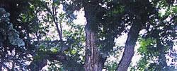 Pic_Tree_01.jpg