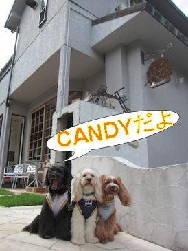 2011.7.3CANDYだよ~