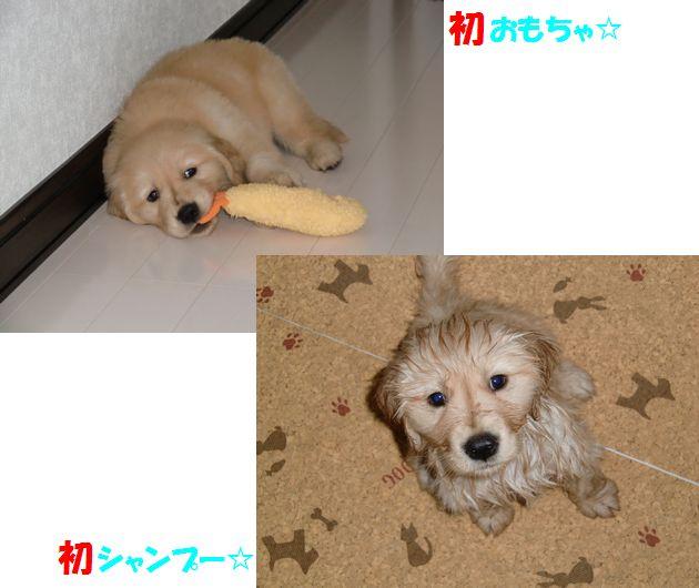 201003blog.jpg