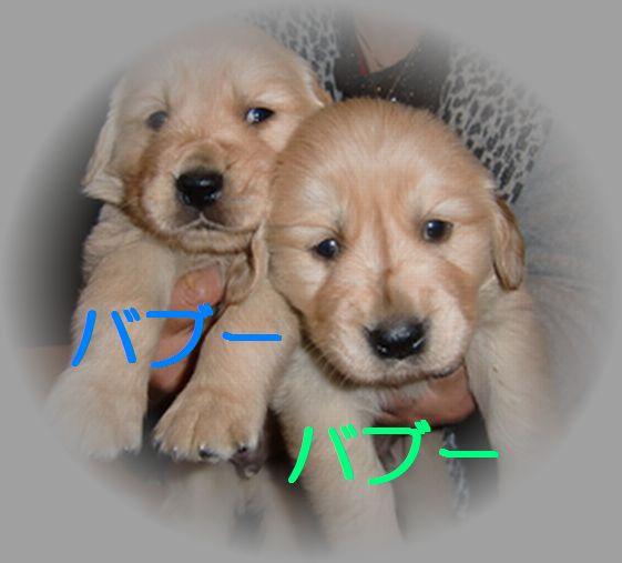 20100719_01.jpg
