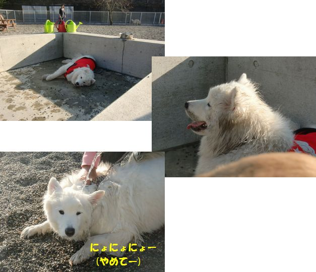 blog201101_7.jpg