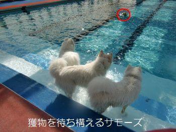 blog20110306_2.jpg