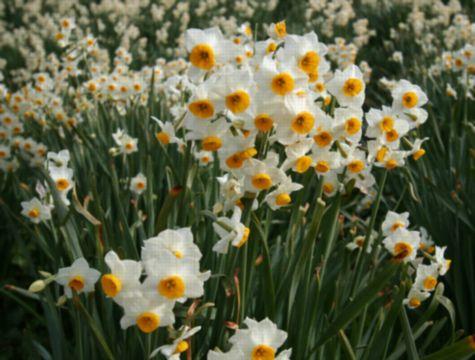 IMG_0448初春の香り