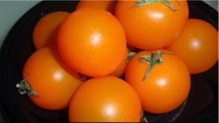 オレンジトマト