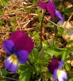 仁伏の春の花