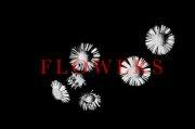 山下ただしflowers