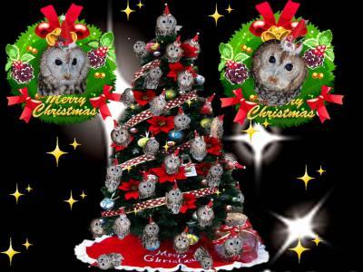 クリスマスクイズ