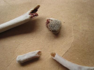手羽先の骨2