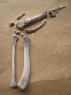 手羽先の骨3