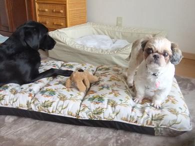 これ、俺とクズルのベッドにしたいな~。