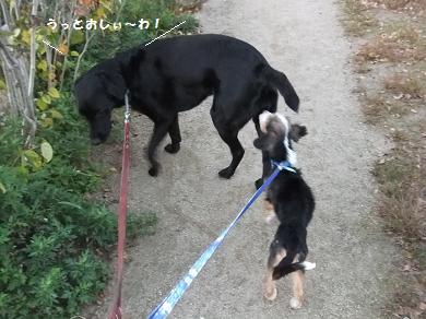 散歩でストレス溜まるってどういう事~!!