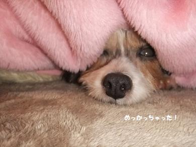 おねしょせーへんから父ちゃんと寝かせて!