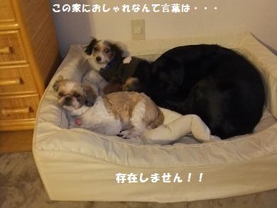保護犬をもっと大事にしろよっ!