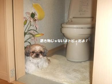 トイレってなんか落ち着くな~♪