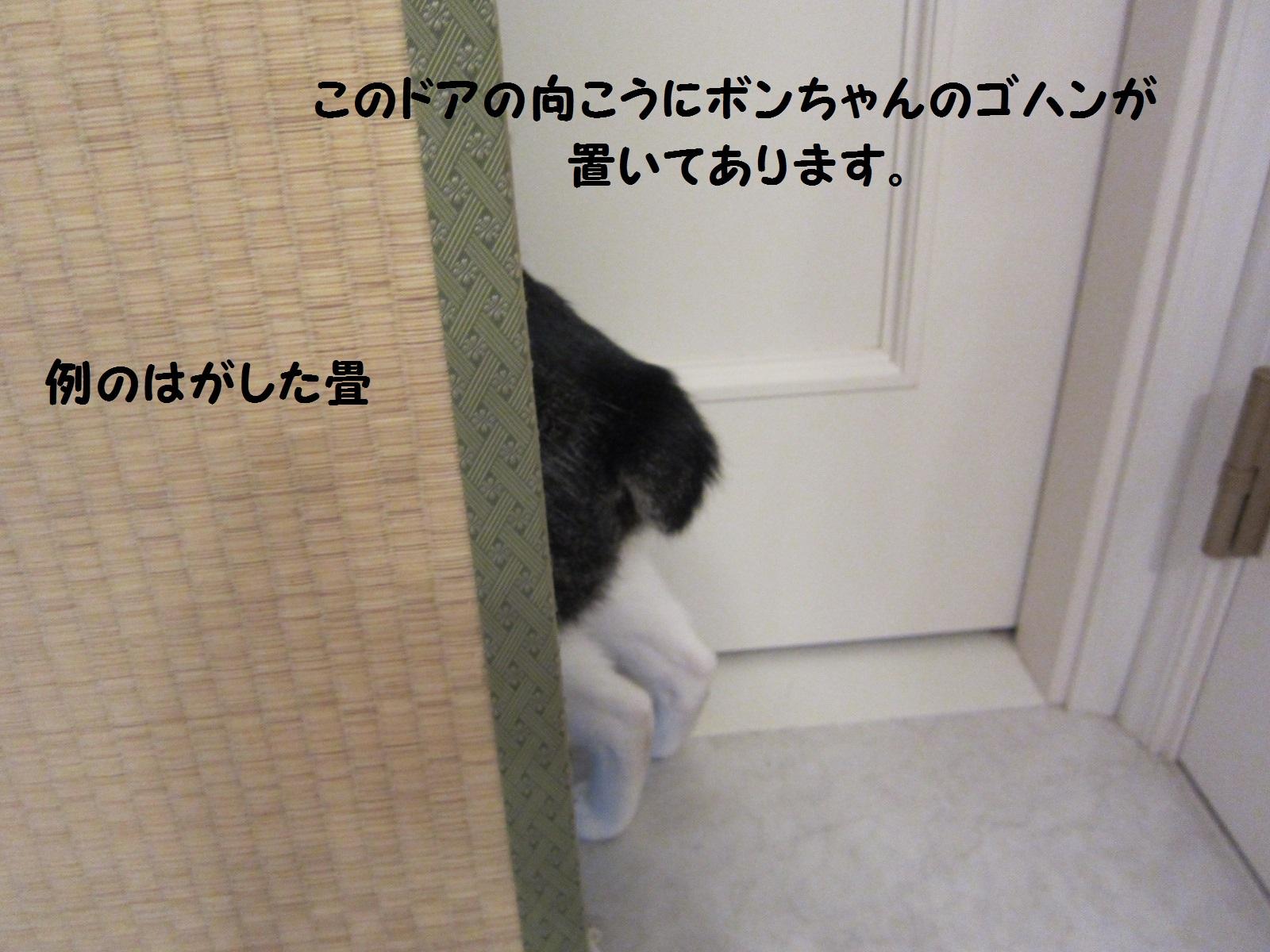 IMG_0660もじ