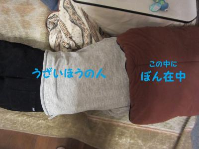 IMG_1141縺・*縺垣convert_20110305120416