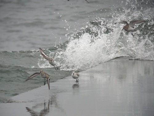押し寄せる波と野鳥