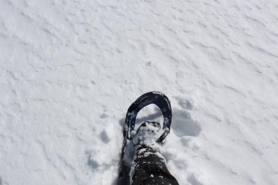 Kiyo Snow1