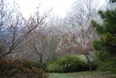 富士見ふれあいの森公園01
