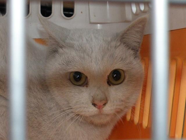 20120223梅猫のかわ
