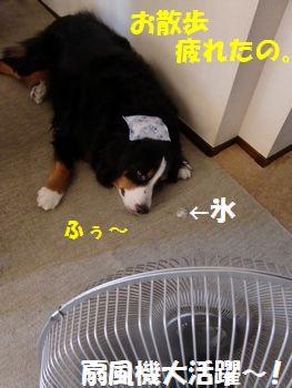 冷え冷えだいすき・・・