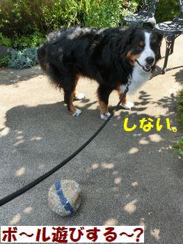 ボール遊びだなんてできないよ~!