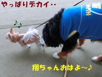 翔ちゃん~!翔ちゃ~ん♪