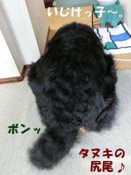 狸の尻尾!?ひどい~。