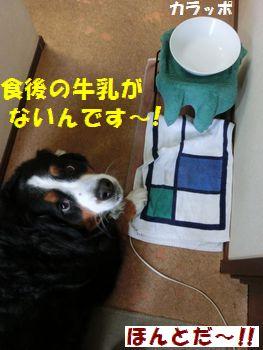 知ってるくせに~!!!