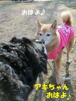 アキちゃんオハヨ~!