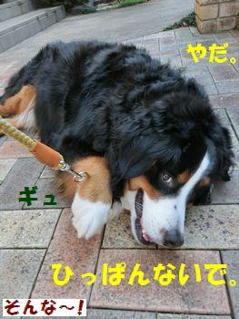 ひっぱんの禁止~!!