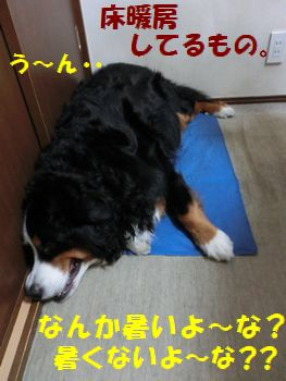 ゆかだんきんし~!!