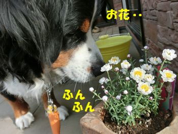 どれどれお花・・・