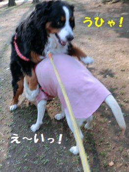 ひゃ~!!どすこいなのに~!!