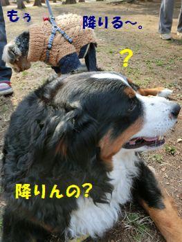 え~!?降りちゃうの~??