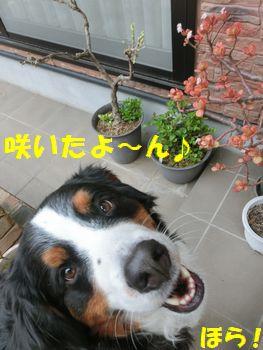 お花咲いてた~!おかね~!!