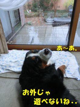 雨と風がすごすぎ~!!
