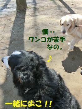 一緒に公園お散歩しよ~!