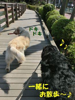 一緒に歩くと楽しいんだよ~!