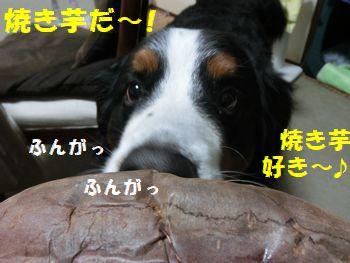 すき~!!焼き芋好き~!!