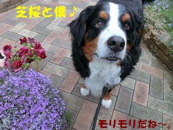 芝桜と僕~♪