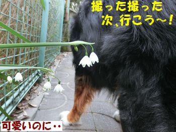 次もどうせお花と撮るじゃない~!