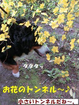 お花咲いてる~♪