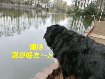 沼が好きだから遊具はいいの。
