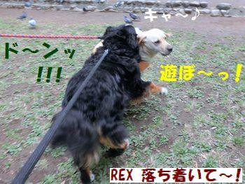 マロンちゃ~ん!!遊ぼう~!!!