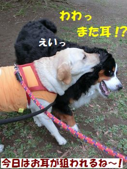 また耳~!?
