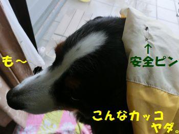 安全ピンだなんて!!