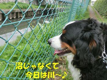 川観察~!
