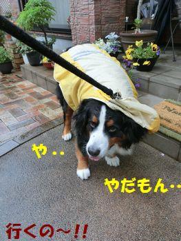 やだ。雨なのに動くのイヤ!