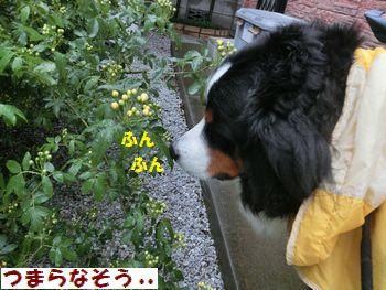 お花・・雨ふっちゃったね。